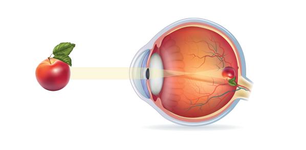 Anatomia del Ojo Visión en la retina